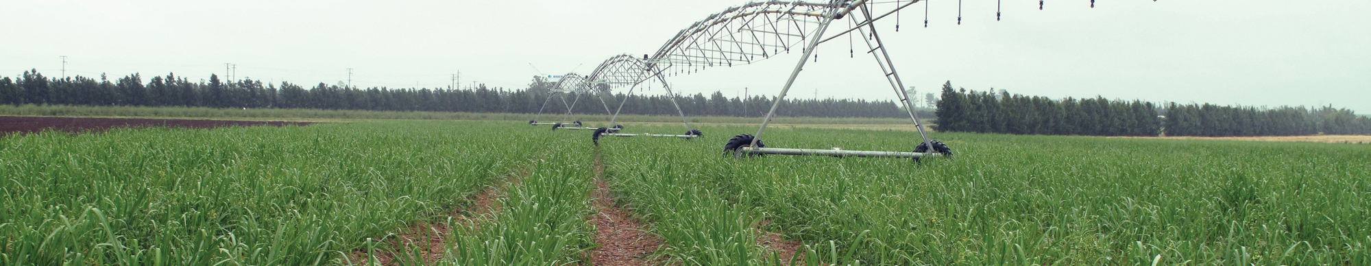 lateral-move-irrigator-cane